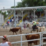 Ranch Rodeo Roping photo image.