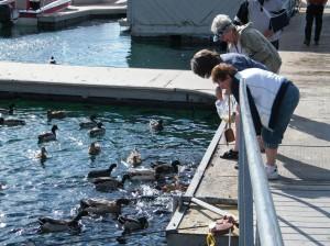 Donna, Kathy and Carol feeding the carp (fish) and ducks.