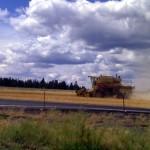Combine harvesting wheat in Colbert WA just south of Deer Park.